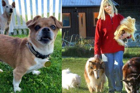 Marianne Øyen på Solplassen forteller at de har færre hunder å omplassere. Lillemor trenger imidlertid et nytt hjem snart.