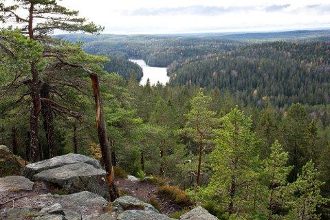 IKONISK FURU: Søk på Tonekollen på Instagram, så ser du at det er mange som har tatt bilde av tørrfurua på Tonekollen. I vinter gikk den på bålet selv om all vegetasjon i Østmarka naturreservat er fredet, også døde trær.