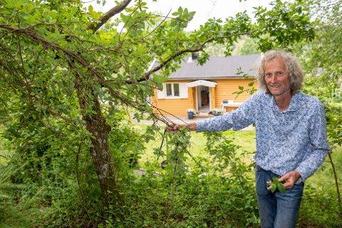 LIKER SEG PÅ HYTT: Anders Often foran hytta og ved ei lita sommereik som er nærmest overgrodd av slyngplanten vivendel.