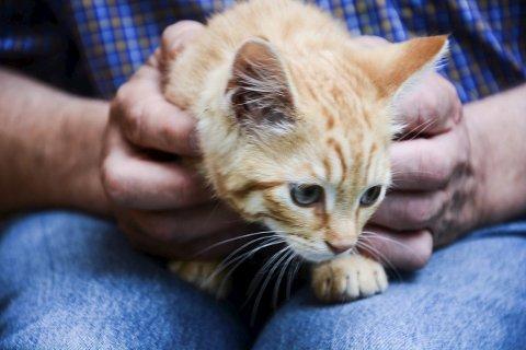 Denne lille kattungen ble funnet i parkeringshuset under Torget, på torsdag. Nå søker den lille pusen en eier.