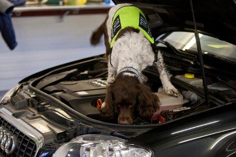 Narkotikasmugling: Kvinnen fortalte tollerne at hun skulle på festival, men narkotikahunden luktet at det var mer i bilen enn det sjåføren ville innrømme.