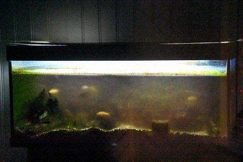 AKVARIUM: Slik så akvariumet på Larvik Pizza ut onsdag formiddag. Da var vannet grumsete og på glassveggene var det algevekst. Noen har ropt varsko ved å sette opp lapp på inngangsdøra.