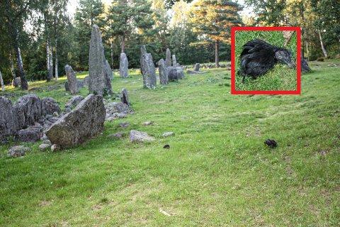 UHYGGELIG: En hane delt i to og voodoosymboler ble møtt av turgåere i ved Istrehågan i helgen.