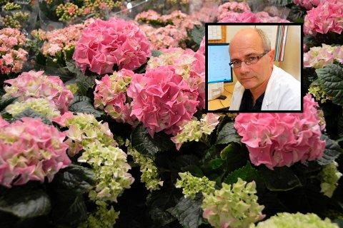 STRENGE REGLER: Det er mange som er glad i blomster. Men blomsterbutikkene får nå ikke lov til å selge varer dersom de ikke er bestilt og betalt før du henter dem. Det er den klare beskjeden fra kommuneoverlege Ole Henrik Augestad.