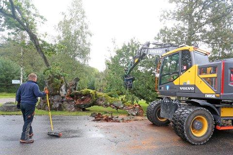 Fagarbeider Svein Dahle i Larvik kommune hjalp til å rydde opp etter at Ullebergeika blåste over ende mandag morgen.