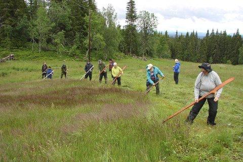 Deltakerrekord: Helle 17 personer fra fjern og nær hadde meldt seg på slåttekurset i helga. Begge foto: Frank Bjørseth