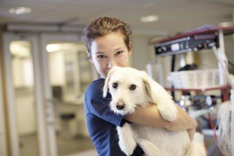 Det finnes både beroligende midler og andre metoder for å hjelpe hunder som skremmes av høye lyder på nyttårsaften. (Foto: AniCura)