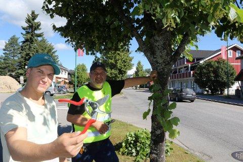 BRA: – Prosjektet er bra og meningsfylt, sier Mikael Østgård, her sammen med vikarierende prosjektleder Rune Grenberg, i sving med å klippe lindetrær i Kaffegata på Flisa.