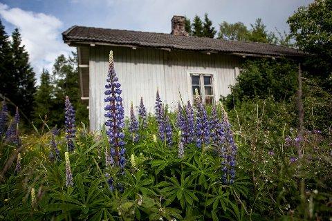 TIL SALGS: Dette gårdsbruket i Åsvang i Stange er til salgs. Prisantydningen på herligheten er én krone.