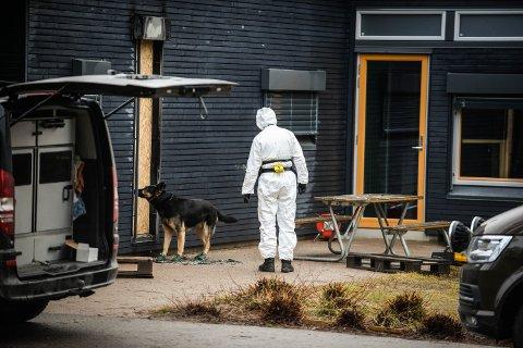 KRIPOS PÅ PLASS: Her er hunden og føreren fra Kripos i gang med å undersøke brannområdet på utsiden av Terningen barnehage.