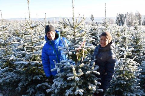 GJØR SUKSESS:  Kjersti Rinde Omsted og Arne Wilhelm Omsted gjør suksess med stor juletreproduksjon på gården på Grue vestside.