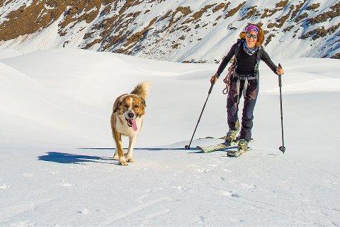 SKADER: – Vi ser hvert eneste år tilfeller av hunder som er skadet i skisporet. Det største problemet med disse skadene er alvorlighetsgraden. Den hyppigste skaden er kutting av akillessenen, sier veterinær Tor Kvinge.