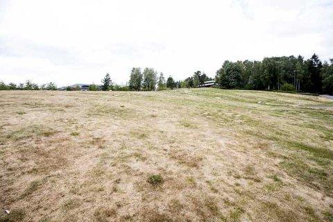 TØRT: Gressletta i Rådhusparken i Lørenskog bærer tydelig preg av tørken.
