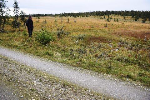 MYROMRÅDER: – Langs vegen oppover mot Klettvollen er det store myrområder med flere djupe myrhull, sier Terje Søberg. Han har sjøl seter på Haarsetvollen, og husker godt teoriene om at Stenersen kunne være drept i Rendalen og deretter skjult i området. Foto: Brynhild Marit Berger Møllersen