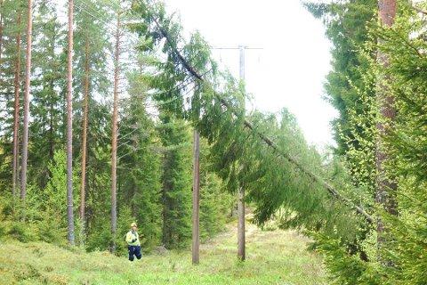 STRØMBRUDD: Kraftige vindkast kan føre til at trær går overende og tar med seg strømlinjer.