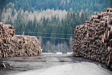 TØMMER: Det er rekord i tømmeruttaket og tømmersalget i Hedmark i 2019.