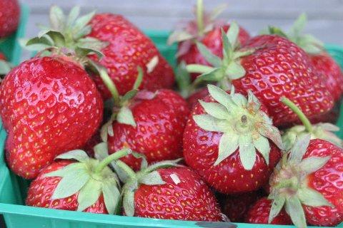 Det varierte sommerværet har gjort at det er godt med jordbær. Toppen er ennå ikke nådd