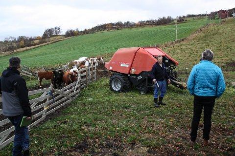 MER AREAL: Thorvall Johaug ønsker å kjøpe nabojordet i bakgrunnen for å bygge nytt fjøs. Torsdag var formannskapet på befaring på gården.
