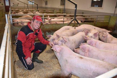 FRA KU TIL GRIS: Ola Sørlundsengen har bygget et nytt og moderne fjøs, der grisene trives.