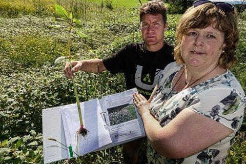 TIL KAMP NÅ: – Det haster med å komme i gang med sommerens kamp mot denne planten, sier Pia K. Lund ved Landbrukskontoret for Våler og Åsnes, her sammen med feltarbeider Andreas Sveen.