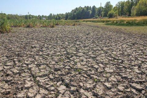 TØRKE: Her på Veierland pleier det å være en innsjø, men i år var det helt uttørket.