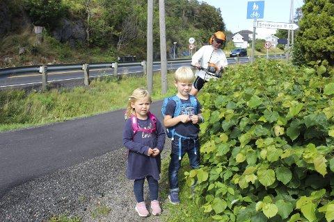 Fri sikt: Sofie (3,5) og Elias (6) Flaatten var med bestefar Morten Flaatten i utedrift i Færder kommune for å sjekke hekker og siktsoner. Denne hekken er for høy, og skal være 0,5 meter. Bak er Reidar Gotteberg (MDG), som er opptatt av sikt for alle trafikanter. Foto: Nina T. Blix