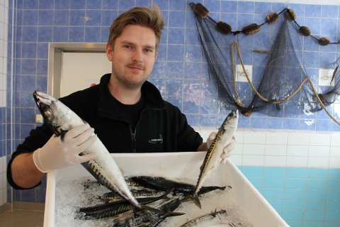 – Se her har vi fått inn fin og stor fersk makrell i Langesundfisk, sier Ole Didrik Abrahamsen. Ryktene om makrellmiddag har spredd seg fort i Langesund.