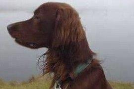 SAVNET: Denne hunden kan ha tatt veien mot Rakkestad.