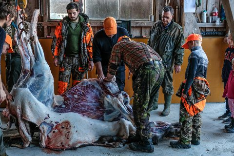 I 2017 felte danske Viggo Olesen sin fjerde elg i Rakkestad. Det var en elgku på 202 kilo.