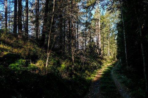 Turstrekningen innover bak Øvre Haugsæter mot Lille Bjørvann var tidligere tilsøplet av en god del skrot. Nå har grunneieren ryddet opp, og hele strekningen har blitt idyllisk og fin igjen.