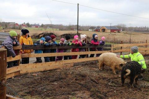 OPPLEVELSER: Du kan blant annet hilse på ullgrisene til Kenneth Ask på Vestre Knolden gård i vinterferien.