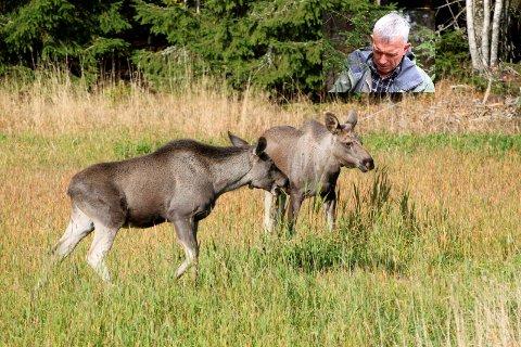 Var på leting: Jan Lie og hans mannskap så flere elger i området ved Dørjestien.