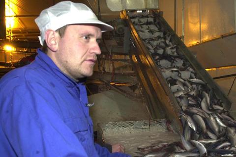 – Vi har store eiere som ser at Træna-anlegget går godt, sier daglig leder Sverre Hyttan hos Pelagia Træna. Nå investerer konsernet 55 millioner kroner på øya i havgapet.
