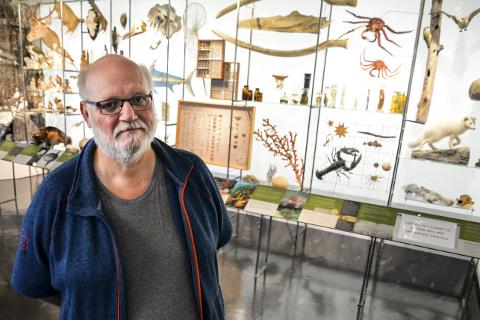 Permanent: Konservator Per Ole Syvertsen, forteller at de nå har fått ny permanent utstilling ved naturhistorisk avdeling ved Helgeland museum avdeling Rana.Foto: Lisa Ditlefsen