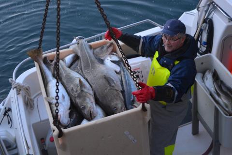 Stein Odd Pettersen fra Hemnesberget med god fangst på skreifiske i Vesterålen. Her ved kai i Myre.