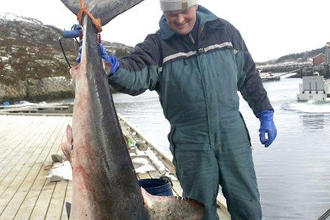 . Kystfisker Jim Lorentsen fra Nesøya og hans mannskap i Havbris dro om bord en hai på drøyt to meter og vel 100 kilo her om dagen