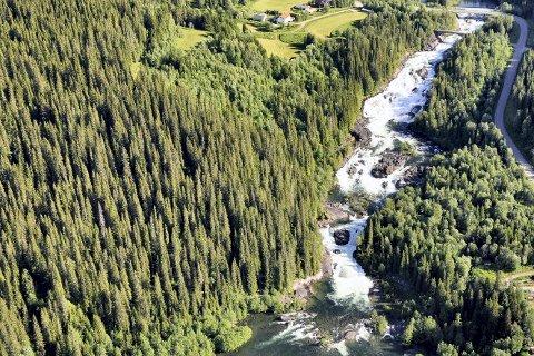 Regjeringen er opptatt av mer skogvern, men de verner ikke noe nytt i Nordland. Bildet viser deler av Sjøforsen naturreservat i Korgen.