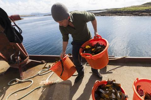 SANKING: På slutten av en intensiv og tidvis værutsatt sesong nærmer det seg 20 sankede tonn med tare på Selvær. FOto: Zoe Christiansen / The Northern Company