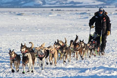 Joar Leifseth Ulsom, Rana trekk- og brukshundklubb, har vunnet Iditarod 2018.