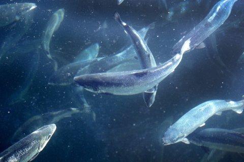 Muligheter: Vekstpotensialet for våre marine naturbaserte næringer, som bl.a. omfatter fiskeri, akvakultur, skipsfart og nye næringer, er enorm, skriver Stine Rybråten og Maiken Bjørkan.