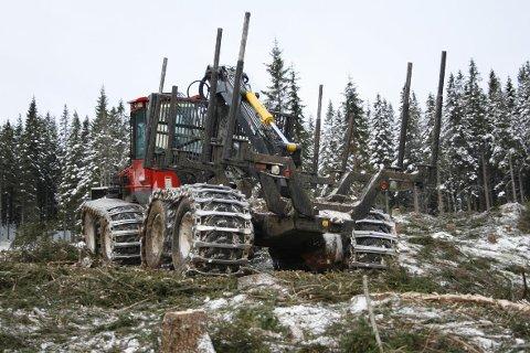 Skogbruksnæringen på Helgeland utnyttes ikke godt nok, det ønsker man å gjøre noe med.