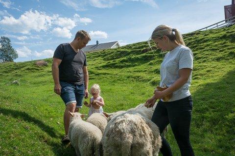 Terje og Stina Røli steller godt med sauene sine, men de hadde ingen mulighet til å redde de to lammene som ble bitt av hund innenfor strømgjerdene på gården. Maja (3) er ofte med og mater både sau og lam.