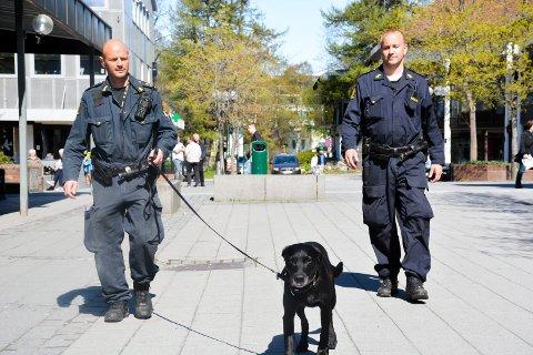 Fylkestinget ønsker å gjøre skolehverdagen enda tryggere ved å bruke politihunder i rusforebyggende arbeid. Bildet er fra en rutineøvelse i sentrum i 2017.