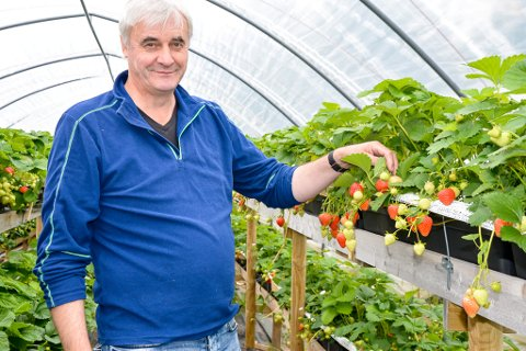 Her viser Arild Stenhaug frem noen av årets første modne jordbær.