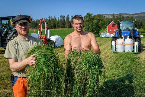 Bernt Ivar Bjerke og Kåre Martin Gjesbakk forteller om bra gressavling under årets andreslått.  - Nå haster det å få fôret i hus, sier bøndene, som er medlemmer i Melkebarten samdrift i Straumbygda.