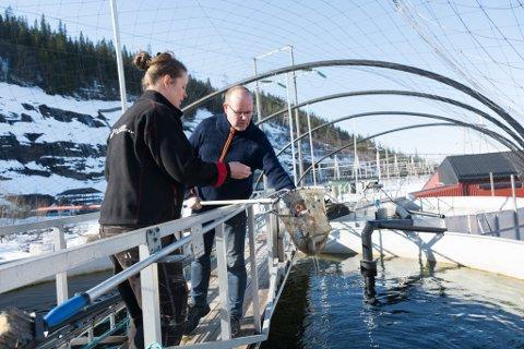 Driftsteknikerne Odd Valrygg og Joanne Isaksen i Kvarøy Smolt håndterer firmaets egen smolt, i tillegg til rogn fra Salten Smolt. Rogna står inne i et mørkt rom, før den på sikt blir som denne settefisken.