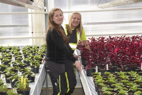 Kristine Masterdalshei og Lise Gruben gleder seg til å vise blomstene de har jobbet med en hel vinter. 10. juni går startskuddet.