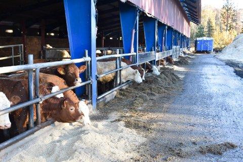 Landbrukspolitikk: MDGs politikk vil avvikle landbruket, skriver Kjersti Røhnebæk (SP). Ringsaker Arbeiderparti har nå en politisk plattform med et parti som i praksis vil legge ned landbruket, melder hun.