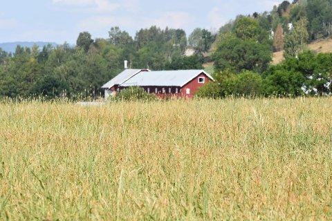 TØRKESOMMER: Lite nedbør gjør at mange bønder sliter med å få avlingene til å vokse. I følge meteorologene er det lite hjelp i vente fra oven.