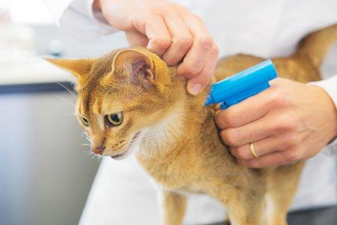 Dyrebeskyttelsen og forsikringsbransjen mener det er på høy tid å lovfeste ID-merking. Pressefoto.